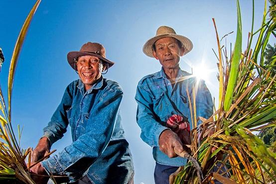 农村粮食补贴每亩可以拿到多少钱?什么时候发放?